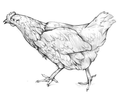 Продукция для птицеводства