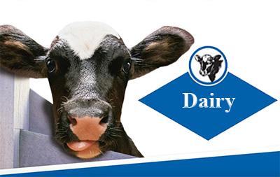 Дайри (Dairy) — Витаминно-минеральный премикс